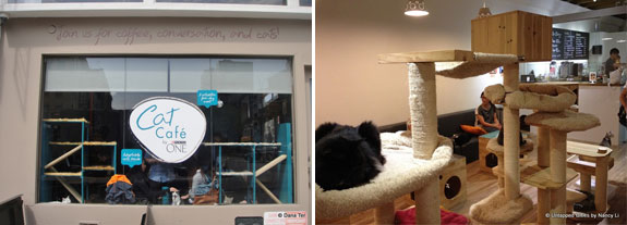 A NYC pop-up cat cafe from earlier this year