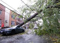 A fallen tree in Brooklyn