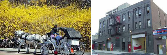 A handsome cab and NYC horse stables